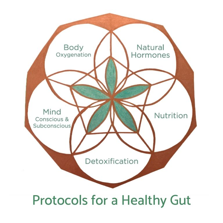 Gut Protocol (Digital Version)