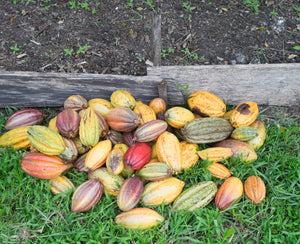 My Journey Through Southern Belize: Cacao Farming & Harvesting (Part 1)
