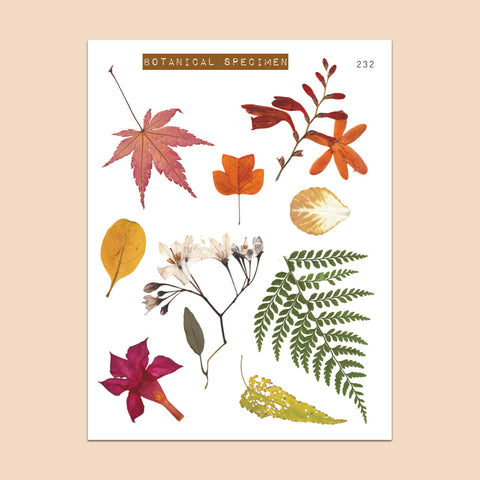 Clear Fall Leaves Stickers Botanical Specimen 232 - PapergeekCo