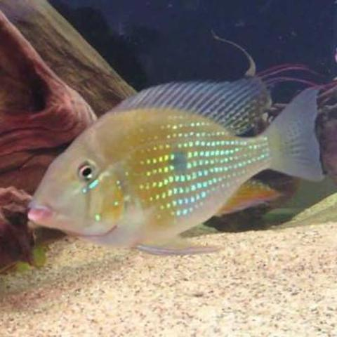 Memorial Weekend Specials: Tropical Fish For Sale