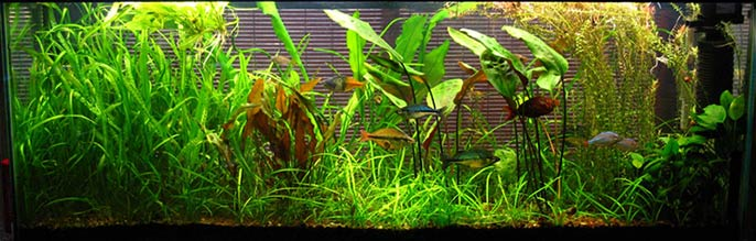 Styles of Aquascaping