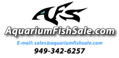 AquariumFishSale.com - Live Tropical Fish for Sale!