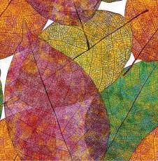Fall Leaves Tablecloth