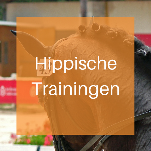 Hippische Trainingen