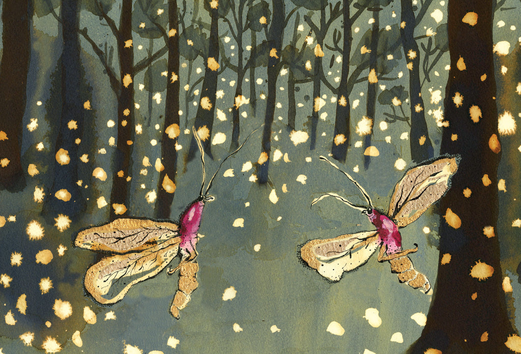 fireflies print from anna wright illustration