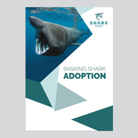 Basking Shark Adoption