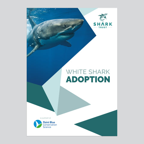 Great White Shark Adoption