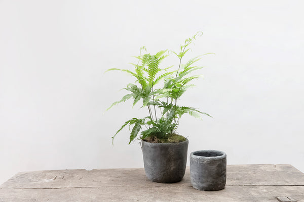 Set of 2 Concrete Pots