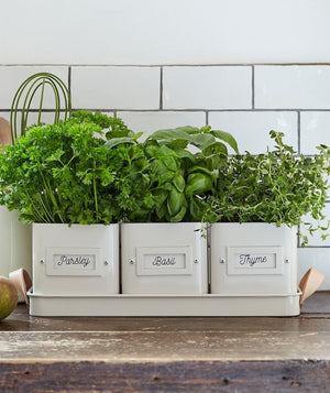 Set Of Three Herb Planters In A Tray