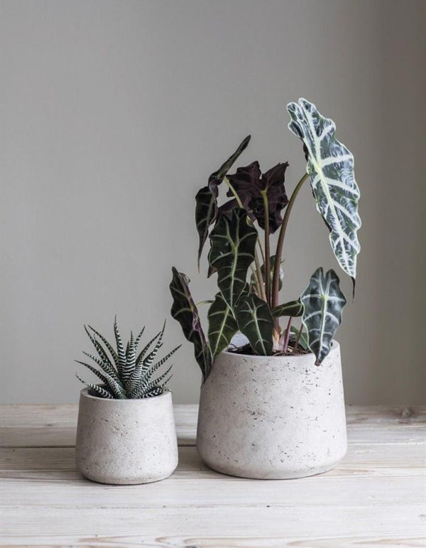 Set Of Two Tapered Cement Plant Pots The Forest Co