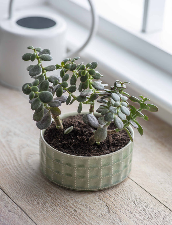 Sage Shallow Textured Planter