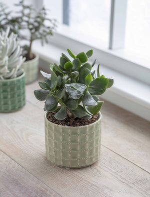 Sage And Green Textured Succulent Planters