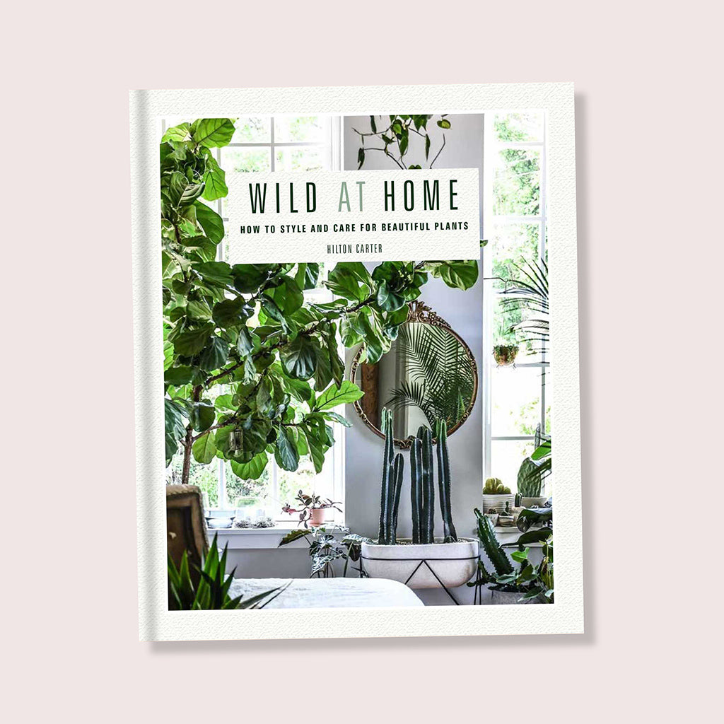 Wild At Home Book By Hilton Carter - Buy online or shop in the Jo & Co Lifestyle, Home and Furniture store in Wadebridge, North Cornwall, UK
