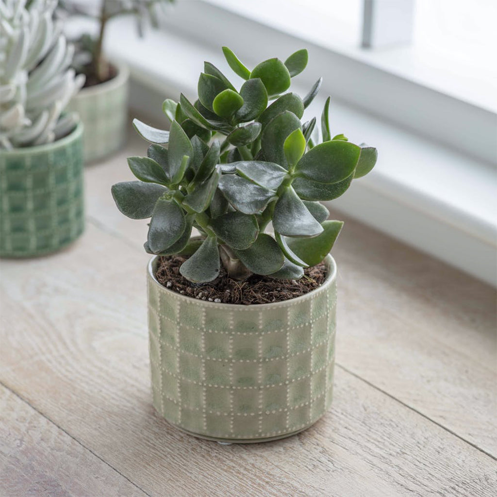 Medium Sage Green Sorrento Pot