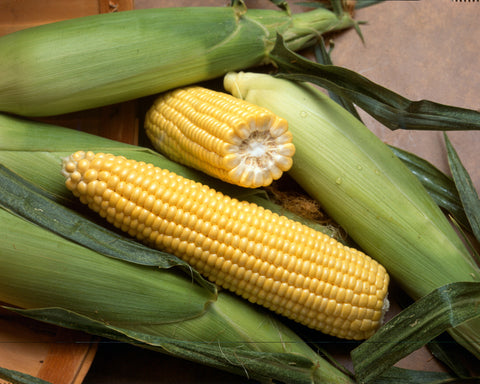 Corn, Golden Bantam   #1909