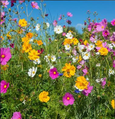 Flower, Beneficial Insect Mix  #9008