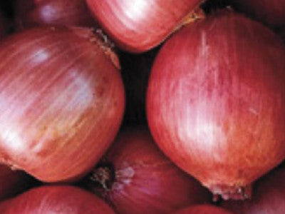 Onion, Rossa di Milano    #2061  CO2