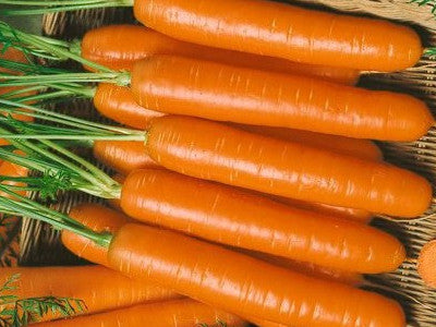 Carrots, Rumba Nantes type   #6006  CO2