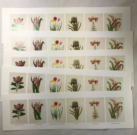 "NOS Wholesale Lot 6 Small Vintage Botanicals Reproduction 4""x16"" Sheet 5 Prints"