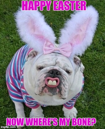 bulldog dressed like easter bunny