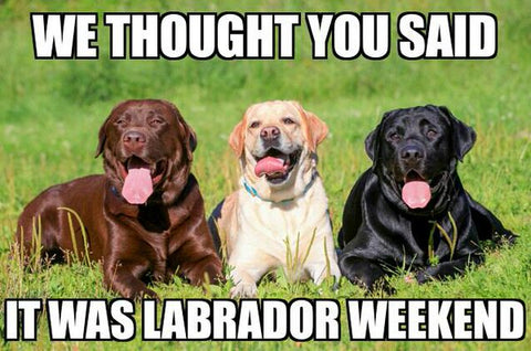labour day dog memes