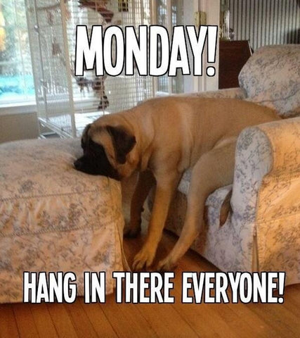 funny dog meme sad about Monday