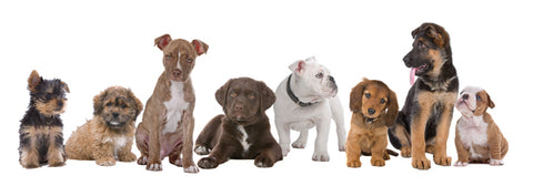 Line of different dog breeds