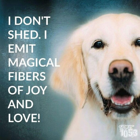 shedding dog meme