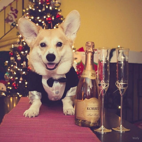 dog getting ready for a holiday party
