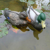 1 Pair (2 total) Mallard Duck Decoys - BuckStruck Outdoors