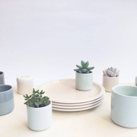 ceramic cups with mini succulents and plants
