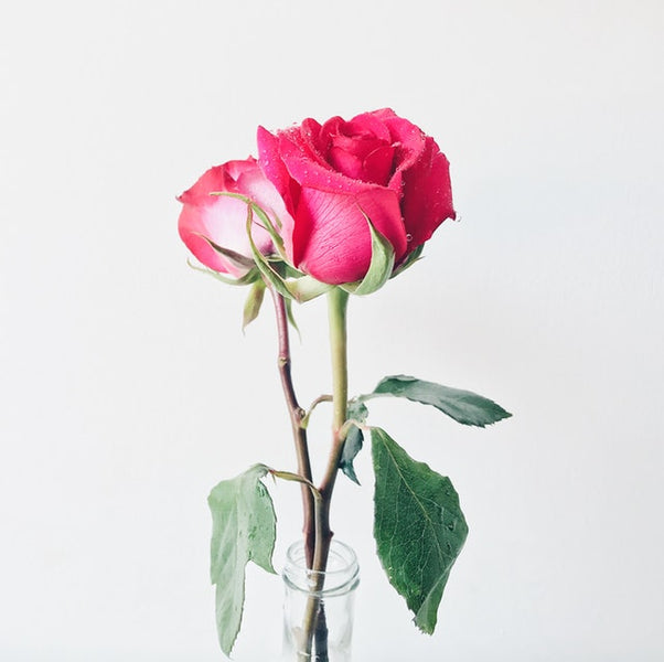 The Beauty Benefits of Rose Essential Oil (And Why We Use It)