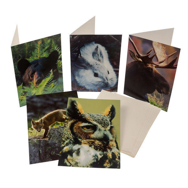 Animal Note Cards