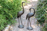 Courting Crane Couple