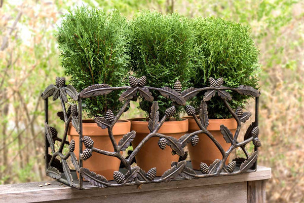 Trailing Pine Planter Box