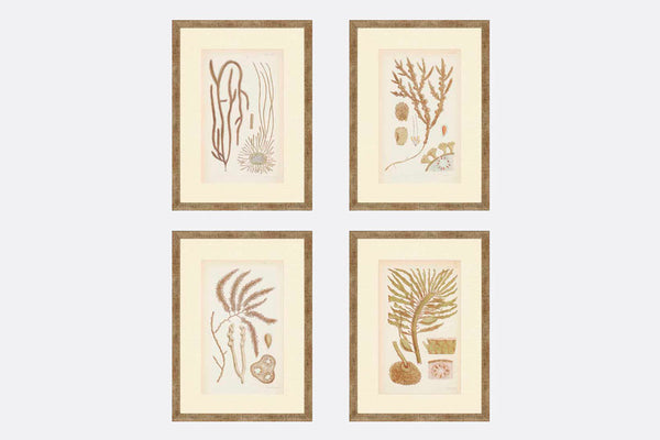 Golden Seaweed Framed Art S/4