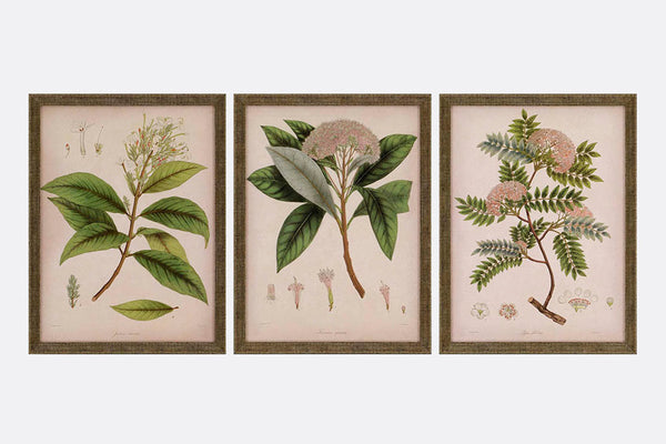 Botanical Blossoms Framed Art S/3