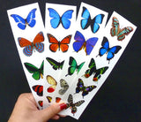 Temporary Butterfly Tattoos - 5 Sheets