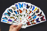 Temporary Butterfly Tattoos - All 16 Sheets