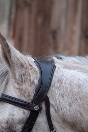 Jumper Flash Bridle