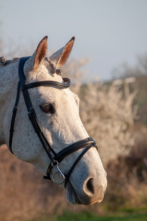 Wide Comfort Flash Bridle