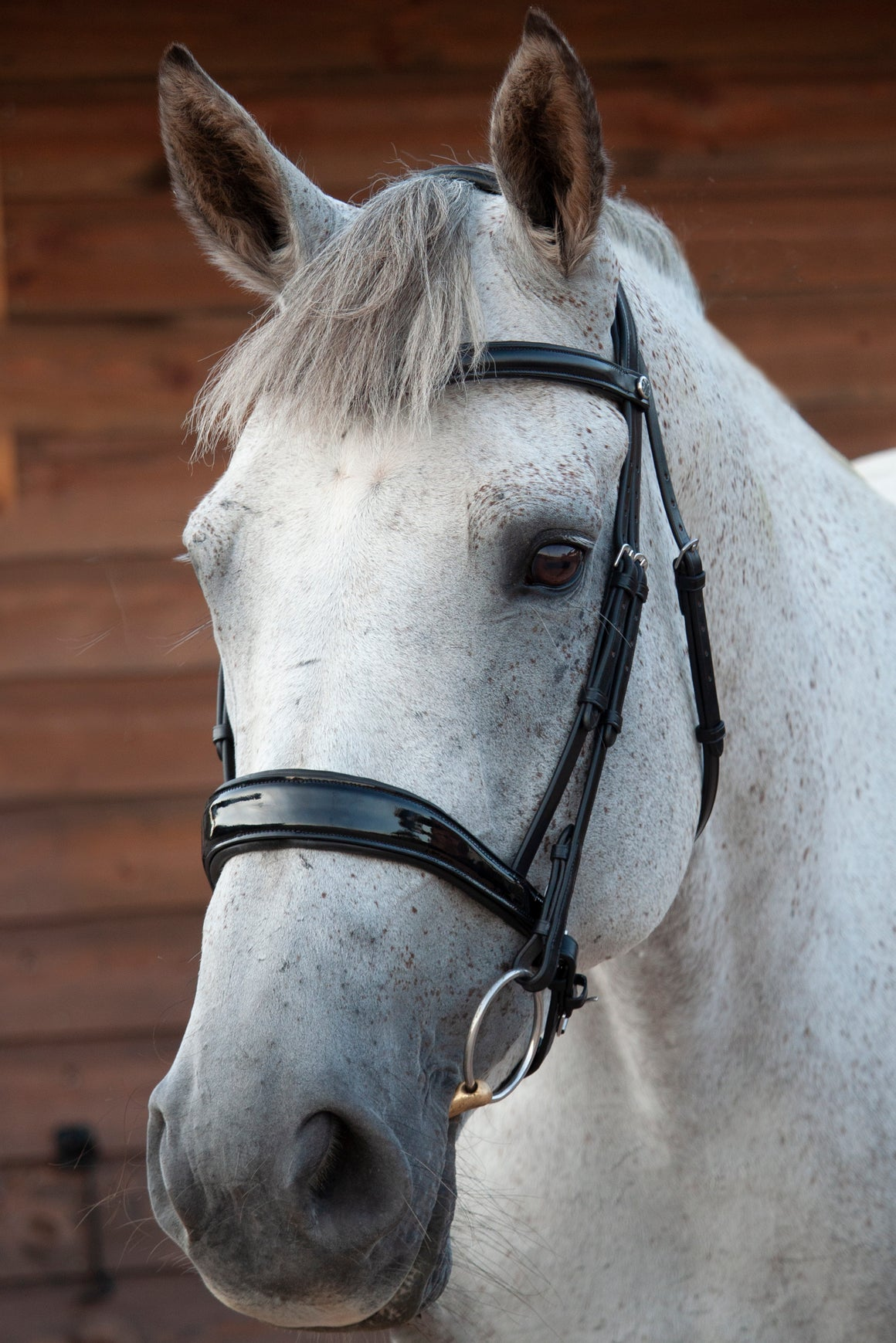 Patent Dressage Bridle