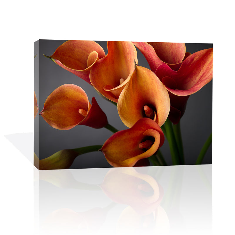 Calla Lilies, Canvas Art by Anon - FairField Art Publishing