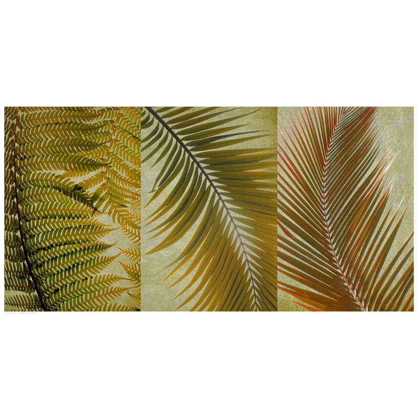 Palm Trio I Floral by Anon - FairField Art Publishing