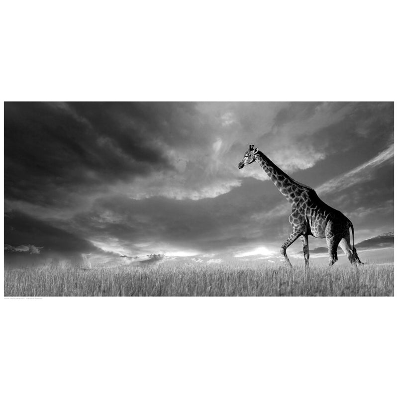 Giraffes, African Skies by Anon - FairField Art Publishing