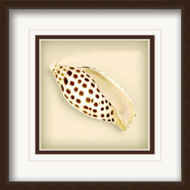 Leopard Seashell Framed Art by Anon - FairField Art Publishing