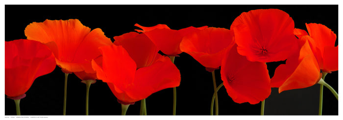 Vermilion Poppies Posters by R. Crum - FairField Art Publishing