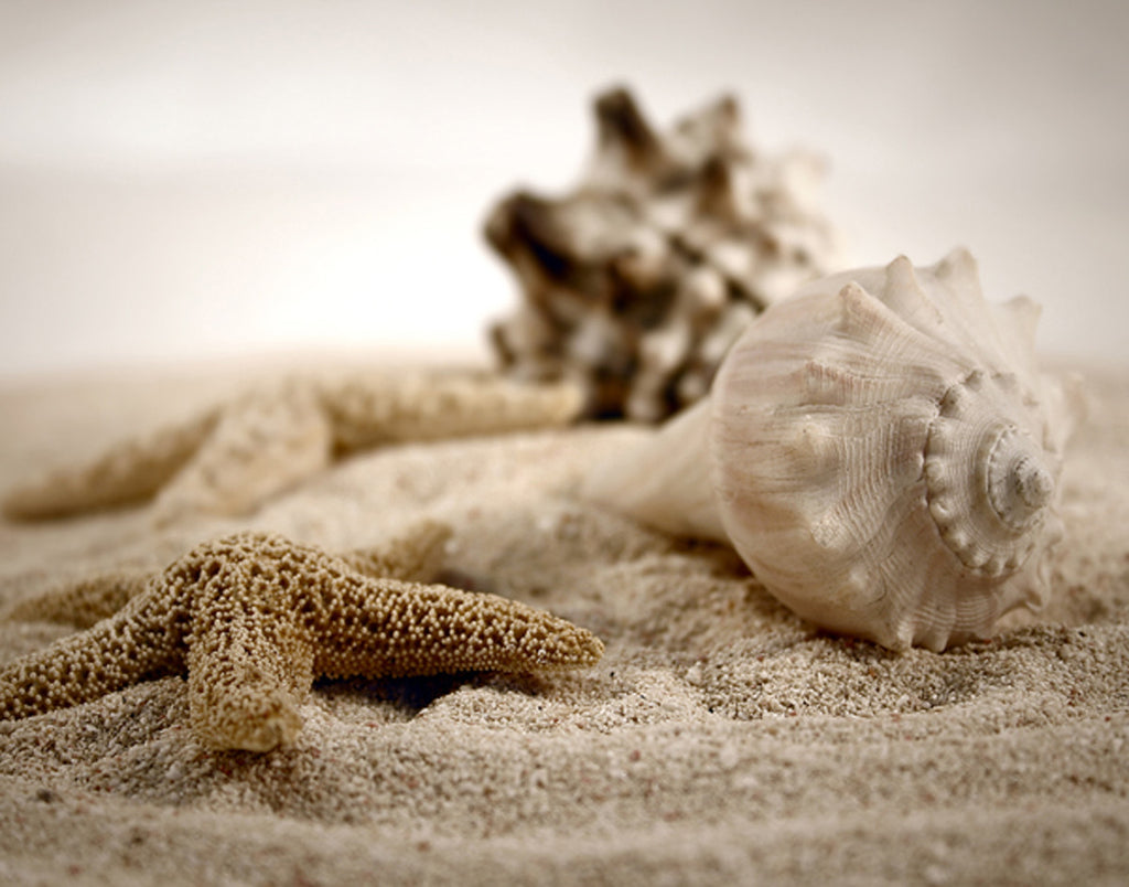 Seashells in the Sand Posters by S. Cunningham - FairField Art Publishing