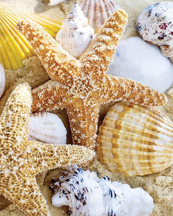 Starfish and Shells, Giclee