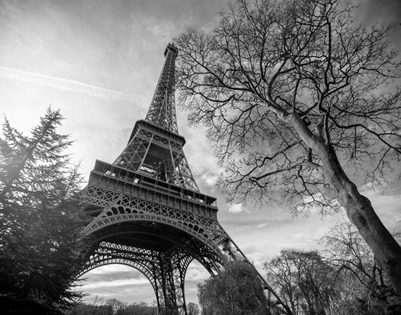 Eiffel Tower with Tree Posters by Stephane Graciet - FairField Art Publishing